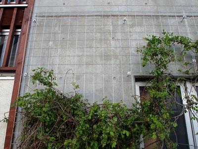 壁面緑化 2