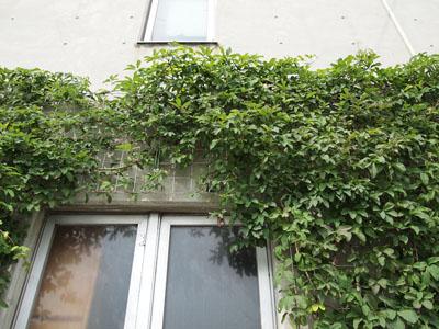 壁面緑化 6