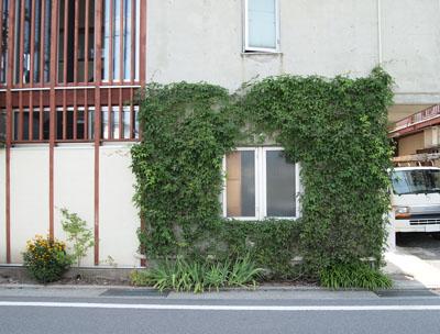 壁面緑化 5